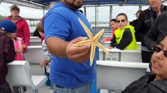 Starfish back