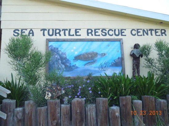 sea-turtle-inc
